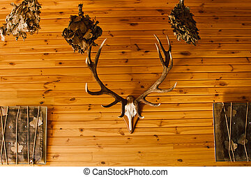 Deer antler on old brown wooden wall