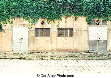 pared, hojas, aislado, Plano de fondo, hiedra