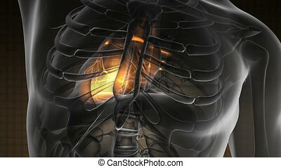 science anatomy scan of human heart glowing with yellow