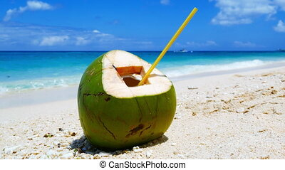 Coconut on the beach - Coconut on a white sand of the...