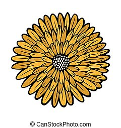 beautiful yellow chrysanthemum isolated on white background....