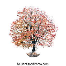 autumn red tree with white background and meadow