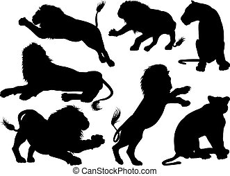 Silhouette Lions - Lion silhouettes. A set of male and...