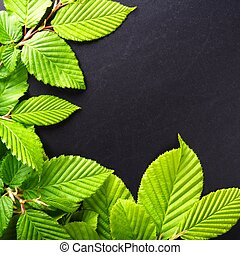 leaves and copyspace - green summer leaves and black...