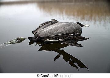 Next reincarnation. Dead black bird with strange feet...