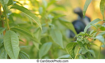 candid camera in green leaves - Hidden camera between green...