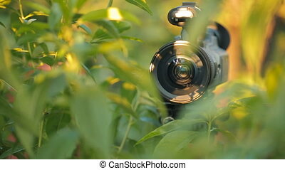 Camera hiding in green bush - Hidden camera between green...