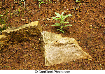 Natural Red Sandy Soil  Rocks and Green Plants