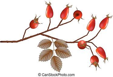 Vector Rosehip Berries - Vector Rosehip berries with leaves...