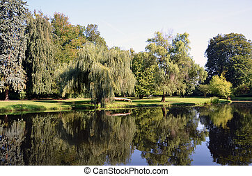 green park landscape with big osier and water pond...