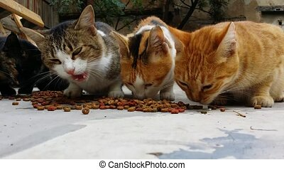 cats eating dry cat Food in a backyard of an abandoned house...