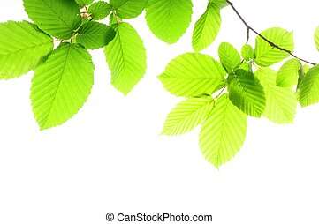 leaf and copyspace - green summer leaves and copyspace...