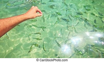 Stripy Fish in Transparent Azure Water with Gleams - small...