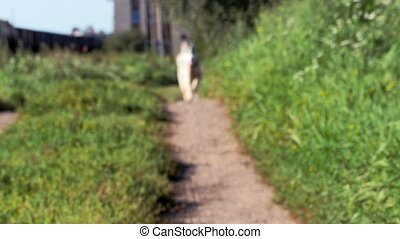 husky dog walking in path