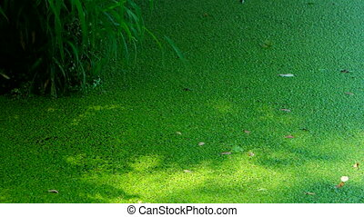 Green bog texture - Swamp covered with vegetation. Green bog