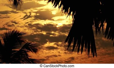 Tropical Sun Rising Between Palm Trees in 4K - Highly...