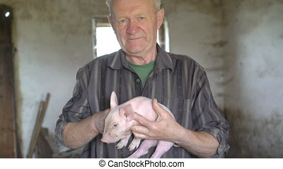 Happy old man with pig on the hands smiling on a camera in 4K