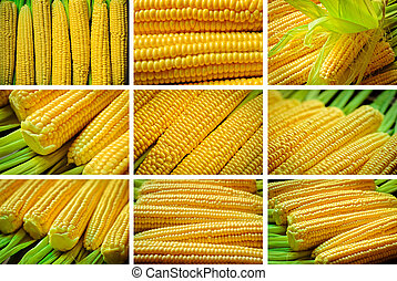 set of corn - a set of yellow corn as a background