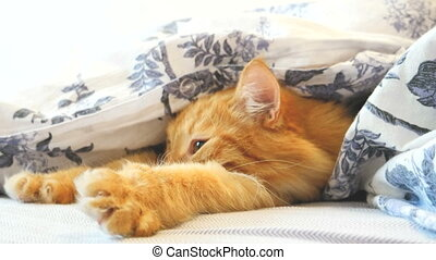 Cute ginger cat lying in bed under a blanket. Fluffy pet...