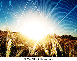 Solar energy concept - Golden wheat field at sunset against...