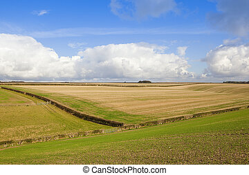 straw stubble fields