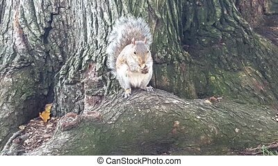 Squirrel eating almond
