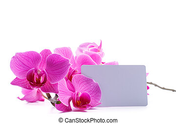 pink stripy phalaenopsis orchid isolated on white