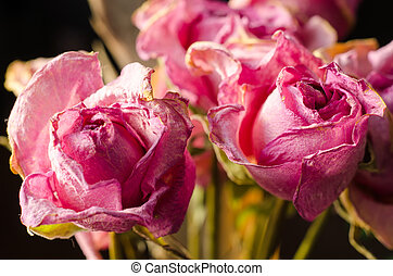 faded roses on a black background