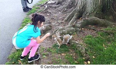 Girl feeding squirrel in the park. Girl play outdoors. Kid playing with pets