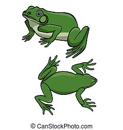 Two green frogs - Two sitting green frogs isolated on white...