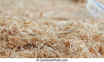 Wooden background: sawdust strewed on the ground at the...