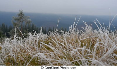 Grass with hoar - Grass covered with frost, wind shaken....