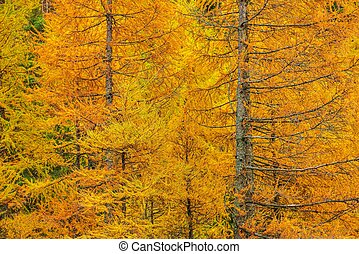 Fall Foliage Forest Closeup Photo. Autumn Forestry Colours.