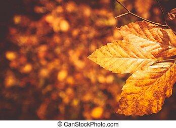 Fall Foliage Background - Fall Foliage Photo Background....