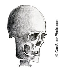 Hand drawing of the skull