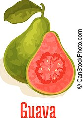 Guava fresh juicy tropical fruit vector icon - Guava. Fresh...