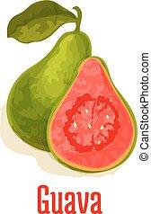 Guava fresh juicy tropical fruit vector icon