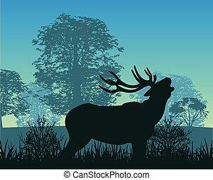 Deer in wood