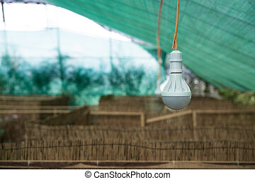 Energy efficient light bulb is hanging on wire.