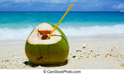 Coconut on the beach - Coconut on a sand of the tropical...