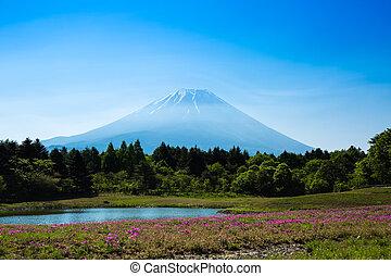 Mount Fuji at Nashiyama after Shibasakura blossom festival.