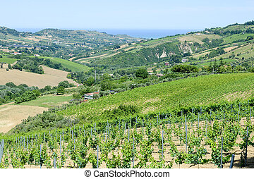 Rural landscape on Marche, Italy