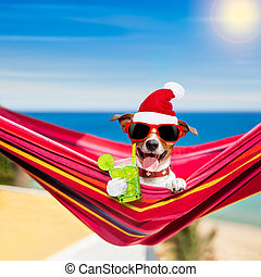 dog on hammock on summer christmas holidays - jack russell...