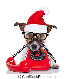 dog on the phone christmas santa hat - jack russell dog with...