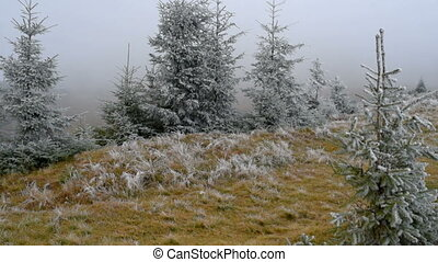 Frosty misty morning - Grass covered with frost, wind...