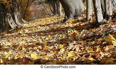 Park alley with many fall leaves - Quiet park alley with...
