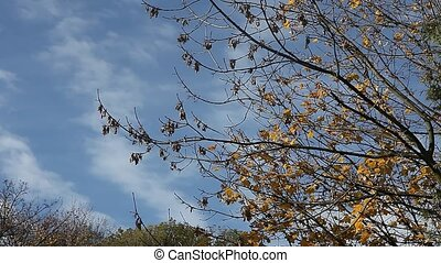 Pretty cloudy sky over serene fall scenery - Pretty cloudy...