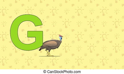 Guinea fowl. English ZOO Alphabet - letter G - Animated...