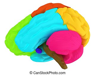 creative concept with 3d rendered colourful brain