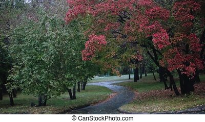 Beautiful autumn scene in the park during the rain. -...